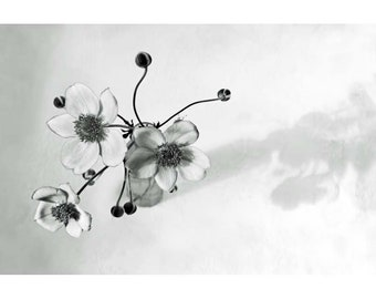 black and white photography floral still life vase of flowers minimalist living room art Japanese anemone photo monochromatic wall art print