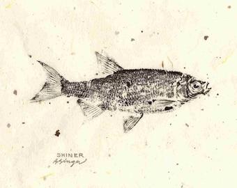 ORIGINAL Shiner real GYOTAKU Lake House Art ( Fish Rubbing ) on hand made Paper