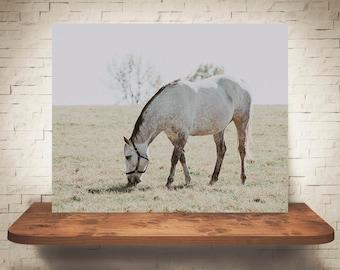 Horse Photograph - Farmhouse Decor - Fine Art Print - Color Photography - Equine Wall Art - Wall Decor -  Horse Pictures - Horses