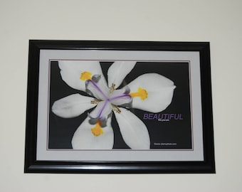 BEAUTIFUL FLOWER  reproduction print (POSTER)