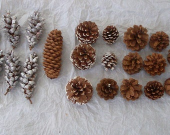 Lot of 23 Various Pine Cones Embellishments Decorations Craft Supplies Natural