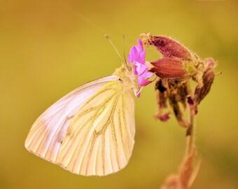 Butterfly Photo, Golden Summer, Yellow, Pink, Faerie, Fine Art Photography, Butterfly print, Nursery Decor, Sunny, Nature Print - Shine