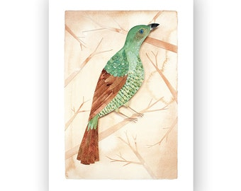 Female Bower Bird - archival art print