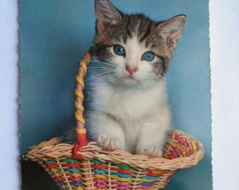 Vintage German Postcard of Kitten in a Basket