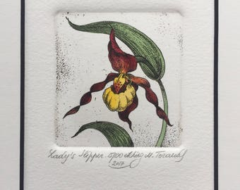 Lady's Slipper. Wild Orchid.