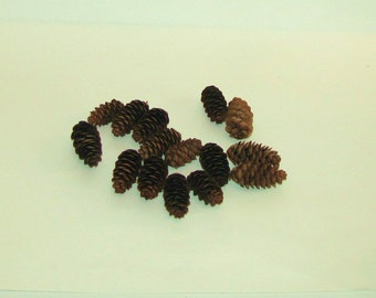 Pine Cones 2.5 inches Long- Lot of 8