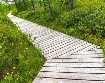 Zig Zag Art, Path Print, Path Photography, Zig Zag Print, Boardwalk Print, Boardwalk Art, Bog Photography