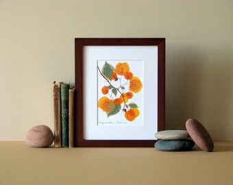 "Pressed flower art, 8"" x 10"" matted, Bougainvillea blooms, Apricot, no. 066"