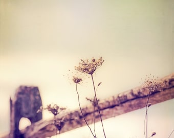 Flower Wall Art - Fence Photo - Vintage - Cottage Chic - Rustic - Dreamy Photo