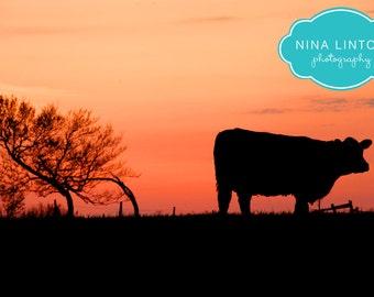 Eve, the MetalPrint, Cow photo, Farm Animal Photo, Farm Animal Print, Cow Art, Farm Photography