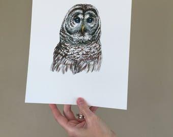 Barred Owl Print