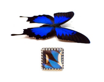 Carolina Panthers REAL BUTTERFLY WING ring Blue and black ring women Royal blue ring Sterling silver adjustable ring Charlotte nc art ring