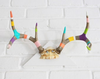 BLACK FRIDAY SALE*** - Painted Antlers Tri Mount - pastel