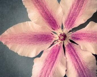 Clematis Flower Photo, Floral Wall Art, Pink Flower Photography, Flower Wall Art, Nature Photography, Clematis Flower Art Print