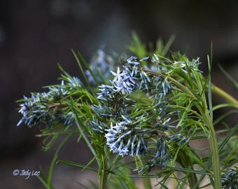 Flower Photography, Floral Wall Art, Blue flowers, Nature Photography, Nature Lover, Home Decor, Botanical