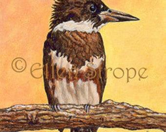 PRINTS,  bird decor, birds, kingfishers, kingfisher decor, gicles print, miniature prints, Ellen Strope, castteam