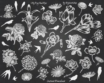 "Chalkboard Flower Clip Art Clipart: ""Chalkboard Flowers"" floral set contains chalkboard images of flowers, bird, vector chalk bird, flowers"