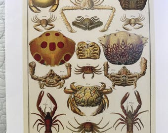 Vintage Coastal Décor Crab Print Crustacean Rock Crab Lobster Book Print Beach Decor Wall Art Ready to frame
