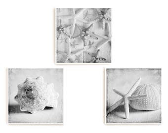 Sea Shell Prints, Coastal Decor, Set 3 Prints, Starfish Art, Bathroom Wall Art, Beach House Decor, Sea Shell Wall Art, Nautical Art