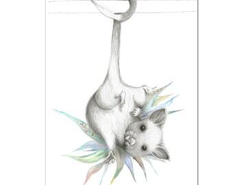Possum Australiana Print A4