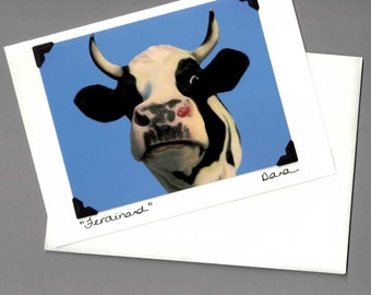 Holstein Steer Card - Funny Cow Card - Cow Art - Black and White Cow  - All Proceeds Benefit Animal Charity