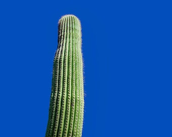Desert Print Blue Wall Decor Cactus Wall Art Saguaro Cacti Landscape Photo Nature Photo Decor Southwest Art Living Room Large Wall Art