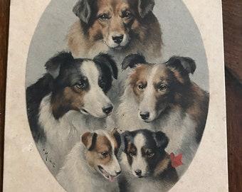 1913 Dog postcard Collies M.M Vienne