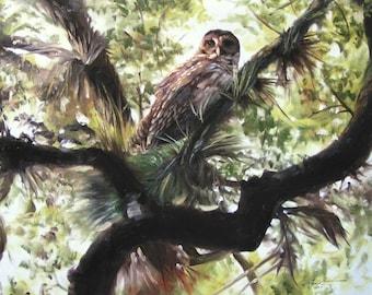 Barred Owl 11 x 17 print (image 10.5 x 12.5)  by artist RUSTY RUST / O-57-P