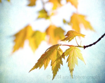 Nature Photograhpy Large Wall Art Yellow Teal Blue Rustic Branches Leaves Photo - 20x20 inch Fine Art Photograph - Still Right Here