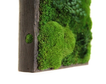 """12""""x12"""" Artisan Moss® Plant Painting® Moss and Ferns in Reclaimed Wood Frame. No Maintenance Green Wall Art. Real Preserved Plants."""