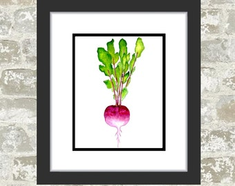 GICLEE PRINT, Vegetable Painting - Watercolor Print - Food Art - Turnip Painting, Food Painting, Kitchen Art, Veggie Print - Onion Picture