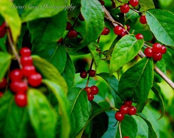 Cherry Tree, Photography, Home Decor