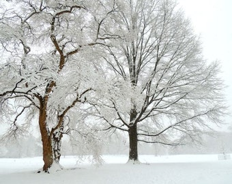 Beautiful Winter - Snowy New York - Winter Tree Art - Nature Art - Wall Decor - White Winter - Landscape Photograph - Nature Photography