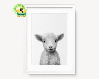 Lamb Print, Baby Sheep Wall Art, Little Lamb Photo, Black White Gray Wall Art, Nursery Farm Animal Decor, Minimalist Art, Cute Lamb Print