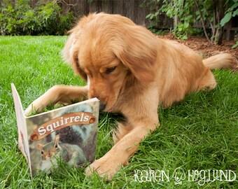 Golden Retriever dog birthday cards - set of 4