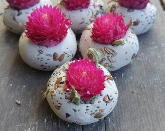 50 seed bombs dark pink gomphrena, wild flower seed, save the bees,   wedding favour, thank you, baby shower