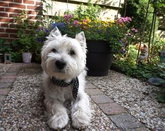 Dog Cooling Collar,Gel Fabric Neck Cooler Bandana Size Small/Medium 12 - 16 inch Black White Dog Bones,West Highland Terrier,Westie iycbrand