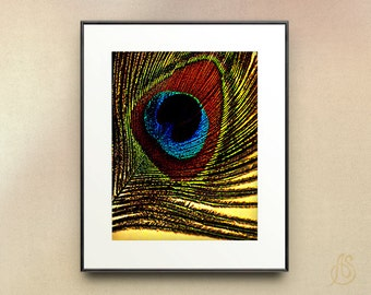 Peacock Feather Art - peacock feather Photograph -feather Art print