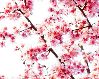 Cherry Blossoms Photography, Spring Photography, Spring Flower Photography, Pink Sakura Flower Print, Cherry Blossom Art, Pink Wall Art