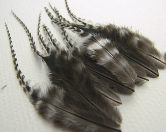 NATURAL GRIZZLY VARIANT Feathers, 3 to 5 Inches Long
