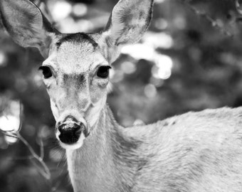 Dreamy Deer - Black & White Photography - Nature Photography - Deer Art Print - Dreamy Photo - Dreamy Nature