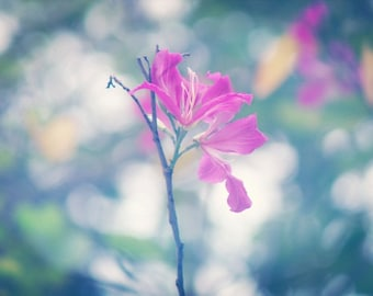 Bauhinia Photograph, Pink flower Wall Art, Pastel Flower Decor, Girls Room decor.