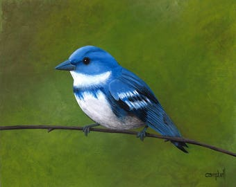 Cerulean Warbler Giclee Print by Tim Campbell