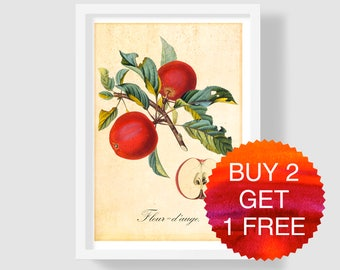 Red Apple Art Print, Apple Wall Art, Botanical Print, Red Apple Illustration, Apple Home Decor, Red Apple Kitchen Decor, Red Apple Poster