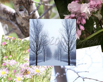 Colorado seasons set of five cards 5.25x5.25