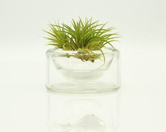 Handmade Glass Air Plant Terrarium