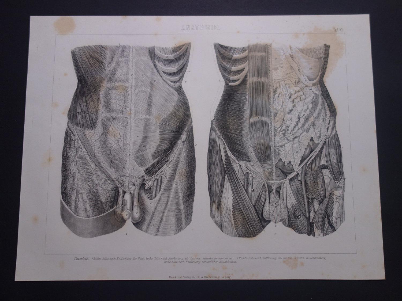 Nett Gunstream Anatomie Und Physiologie 6. Auflage Zeitgenössisch ...