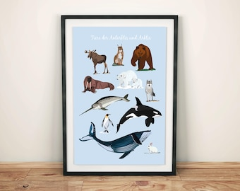 Posters Animals of the Arctic and Antarctic