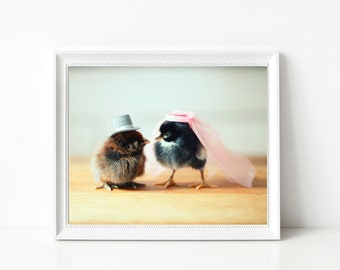 Baby Chicks Pink Bridal Veil Wedding Gift Top Hat Chickens Picture Photograph Animal Print Marriage Art 8x10