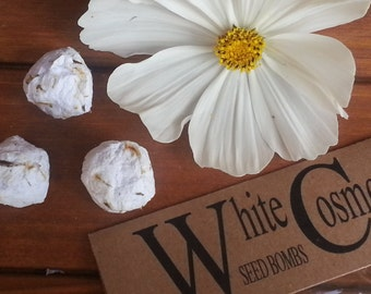 White Cosmos seed bombs, flower seed bomb, wildflower seed bomb, plantable paper, seed kits
